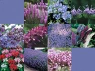 Wild Flower Seeds Butterfly and Bees Mix 20 g -32 Varieties- Only Flowers - BULK